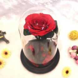 Луксозна вечна роза в стъкленица BEAUTY&THE BEAST RED, 27см 6